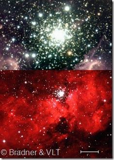 NGC 3603 Bradner ESO